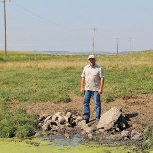 Jason Lenz installed tile drainage on his Bentley-area farm nearly 30 years ago and now uses the run-off it collects as a fresh water source for his cattle.