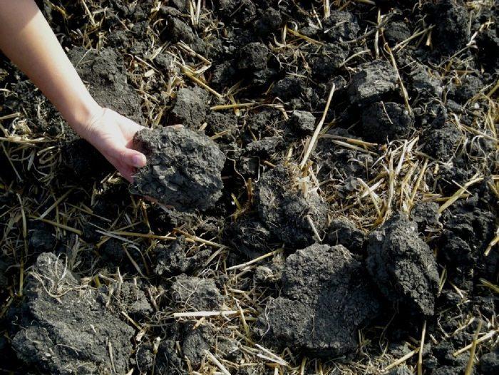 Soil challenge aims to turn atmospheric carbon into soil for Soil tour dates 2015