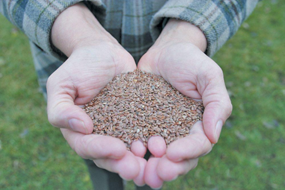 Flax 2013-Seed in Hand.jpg