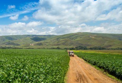brazil soybeans