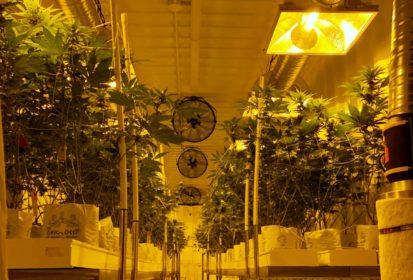 delta 9 cannabis