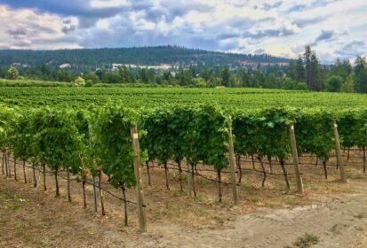 naramata vineyard