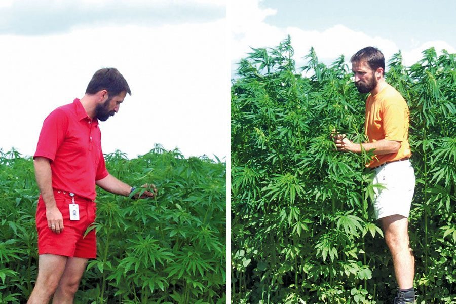 Man tending to a hemp field.