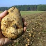 Alberta potato producers back non-refundable checkoff