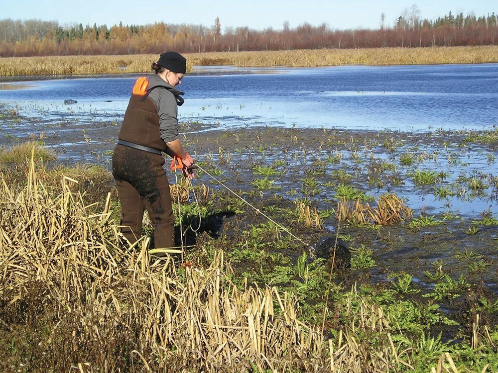 person working near a marsh