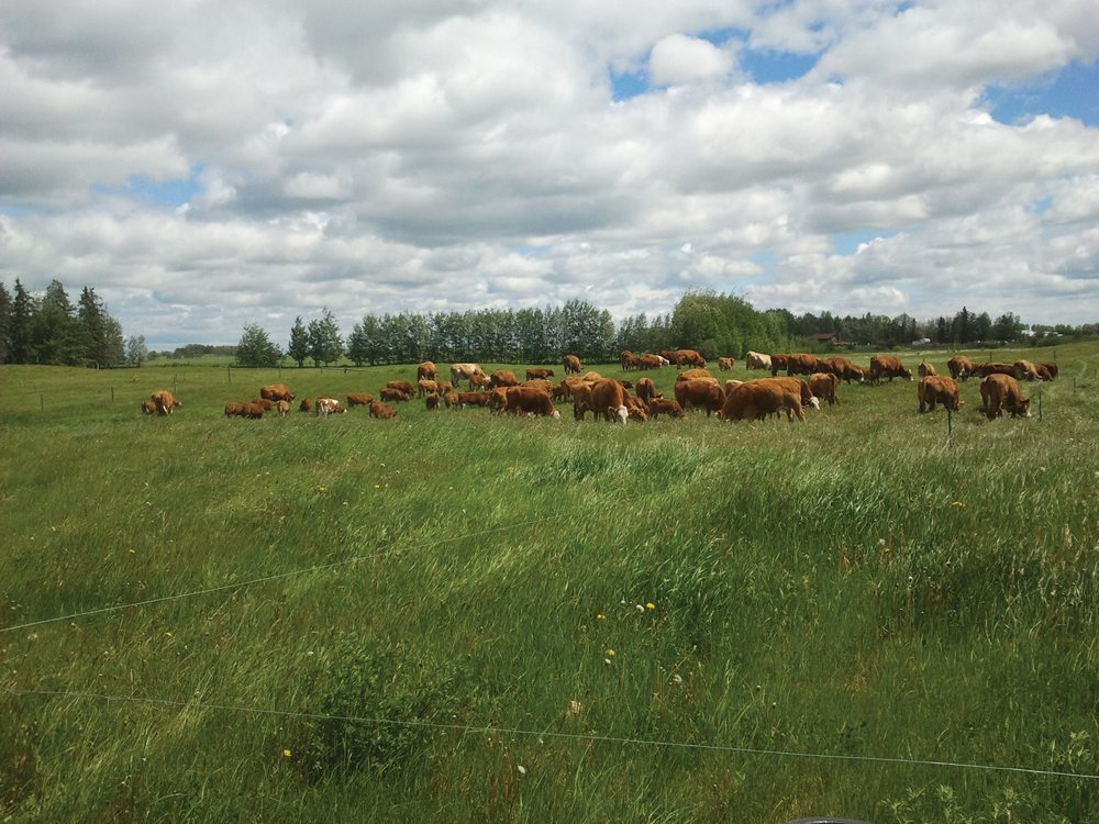 By giving each paddock ample rest, Mark Burggren 