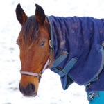 What to consider when blanketing your horse