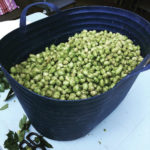 Demand is there, but jumping into hops isn't easy