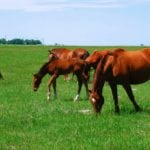 Horses should be classed as livestock, argues industry group