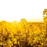 "Canola 100 ""game on"" for 2018"