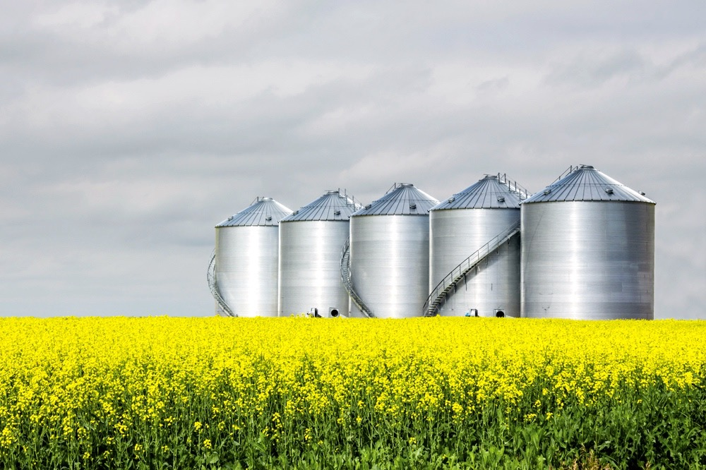 five steel grain bins sitting in canola field.