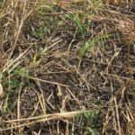 Why didn't my cover crop work?