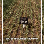 Les Henry: Water quality and herbicides