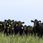 Beef industry is meeting new challenges