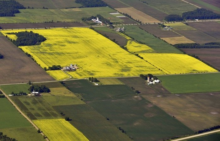 Canola Field aerial