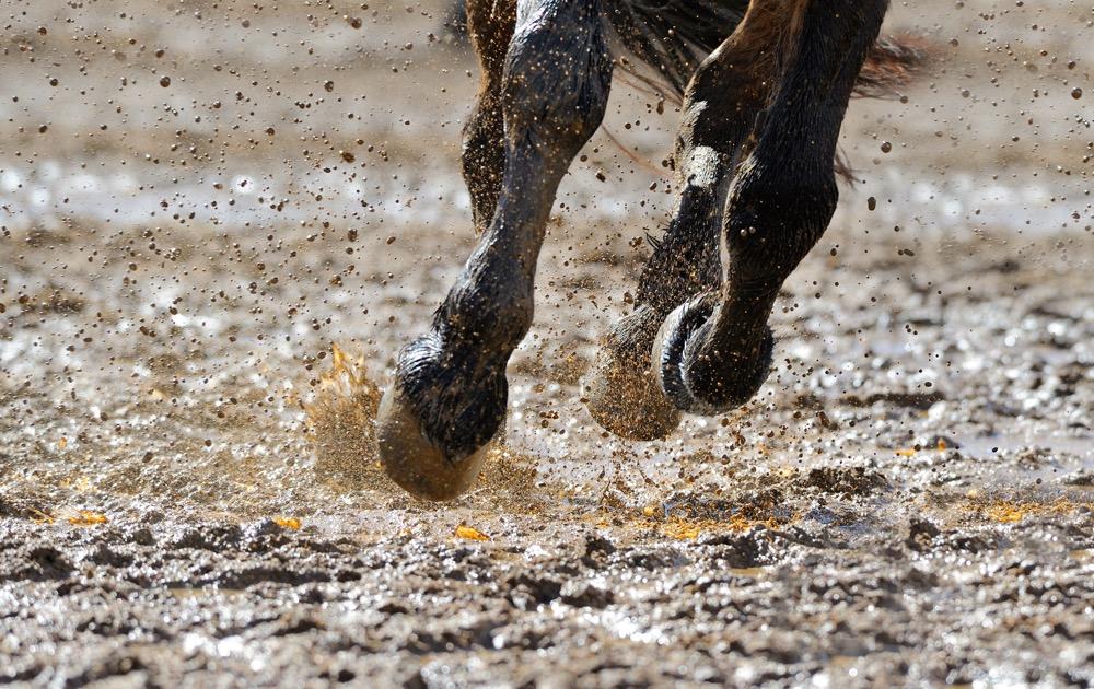 Horse's legs running in water