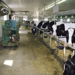 Pilot program seeking dairy farmers