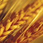 Prairie wheat bids mixed while U.S. futures rise