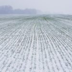 Snow-bare cereals see deep freeze