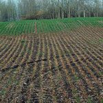 Winter cereals (mostly) dodge winterkill woes