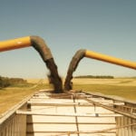 Yield, quality uncertainties supportive for canola futures