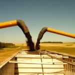 Canola finds independent strength against soybeans
