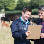 Stand and be counted: beef industry seeking vets for EU compliance inspections