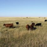 Ranchers call for certainty on unit transfers