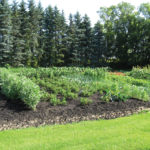 Planning and planting the veggie garden