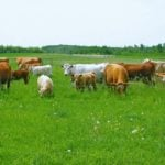 Manitoba Forage and Grassland Association backs up regenerative ag