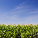 Opinion: Resetting U.S. corn expectations after USDA's acreage shocker