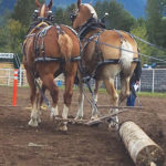 Joint maintenance for horses is systemic