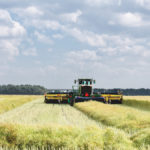 Pod shatter reduction canola sounds swathing's death knell