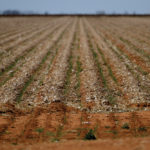 Australia offers drought-ravaged farmers cheap loans