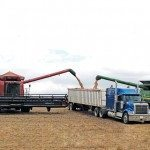 combine emptying grain into a semi trailer