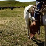 rancher on a horse cattle in background