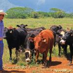 Ranching, Kauai style