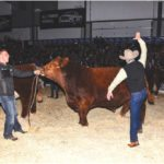 Limousin bull picks up five championships