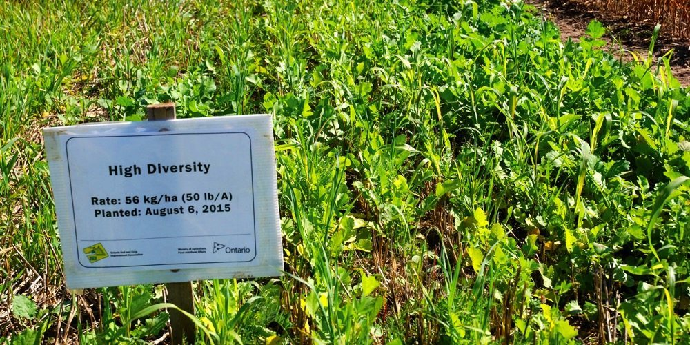 One of the many cover crop blends showcased at Canada's Outdoor Farm Show in 2015.