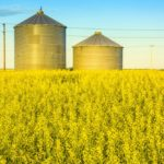 Grain Bins in a Canola Field